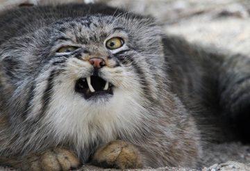 агрессия кота