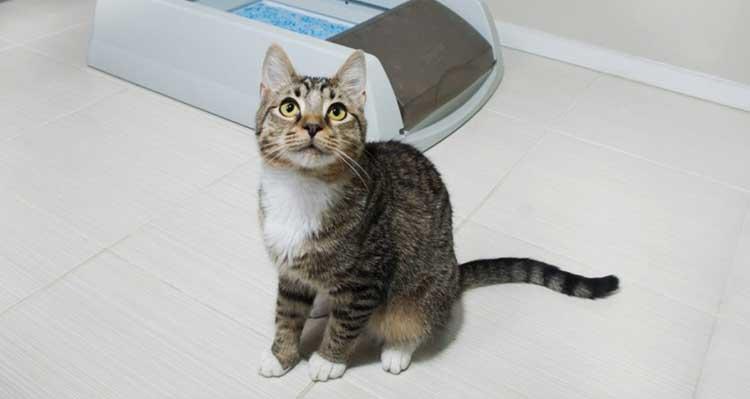 кошка метит